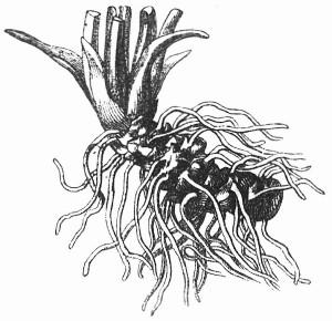 Das Rhizom: eine wichtige Denkfigur von Gilles Deleuze und Félix Guattari